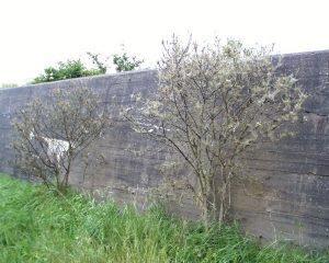Een muur behorende tot de Atlantikwall